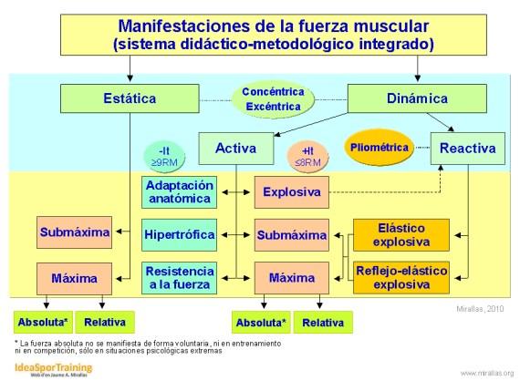 Esquema de las manifestaciones de la fuerza muscular (2010)